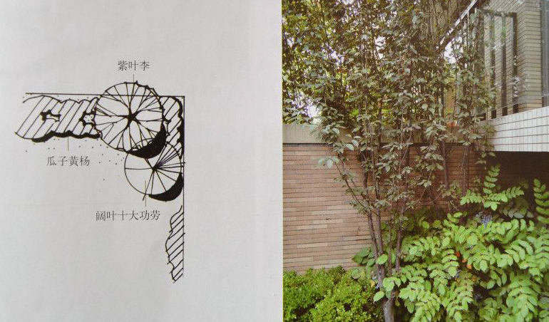 园林设计实例 植物配置平面图与实景对照