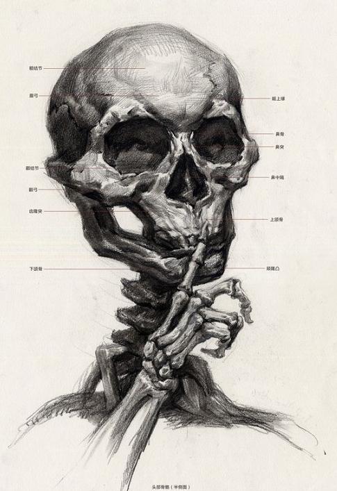 人体头部结构素描解析