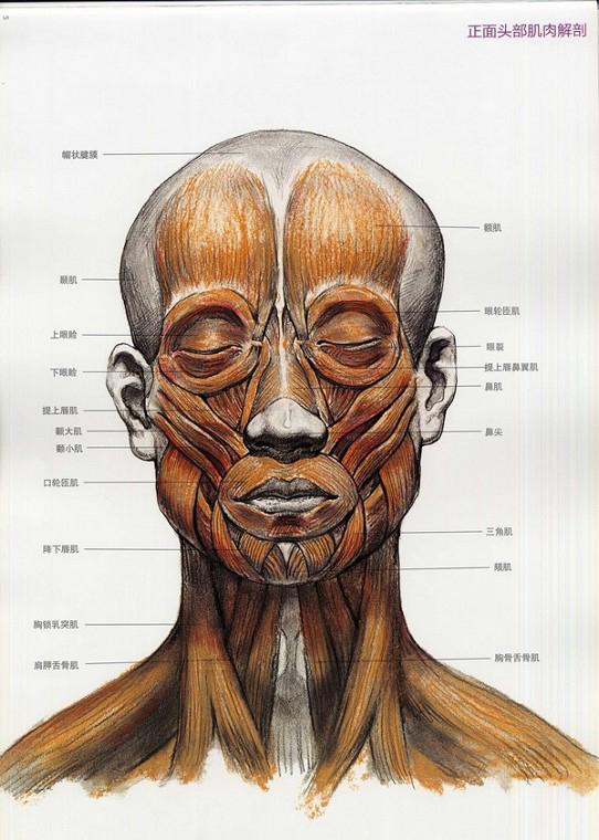 人体头部结构素描解析 看明白了你就成高手!