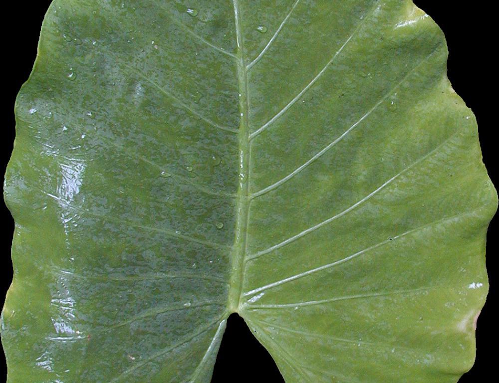 树叶材质贴图集-3