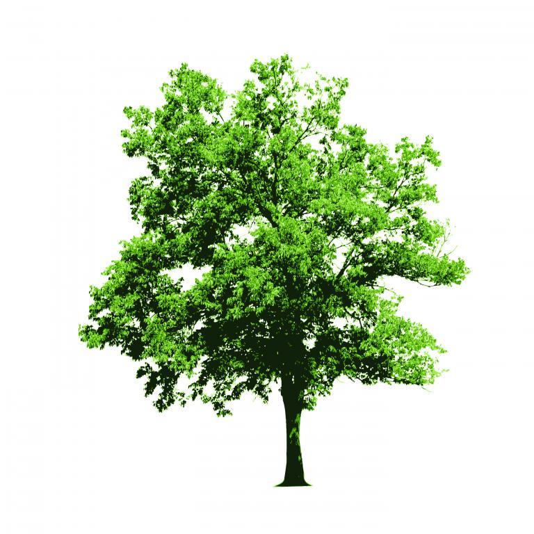 标签:树木叶子矢量素材树枝大树树叶树干树杈 素材分类: 素材首页